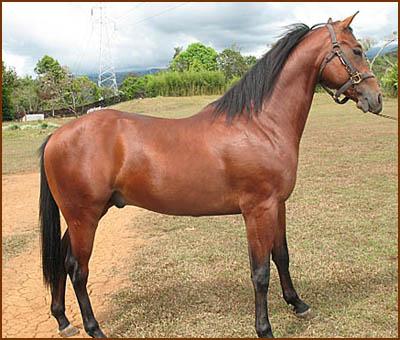 Rancho Triple K - Cria de caballos de cuarto de milla, caldera ...