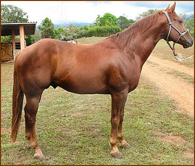 Rancho Triple K - Cria de caballos de cuarto de milla ...